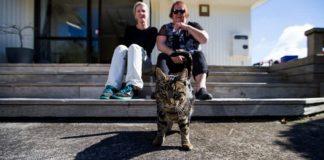 Kedi Yeni Zelanda